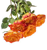 Cinco aislados ramo rosa naranja — Foto de Stock