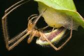 Spider on nest photo — Stock Photo