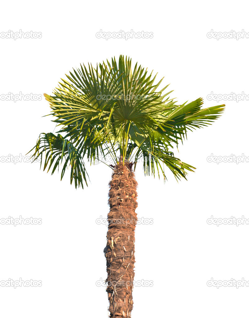 Single palm tree pictures - 3dify pictures of termites