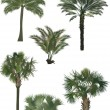 Постер, плакат: Six color palm trees