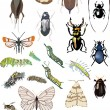Twenty five color insects collection - Stockvectorbeeld