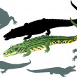 Crocodiles on white illustration - Stockvectorbeeld