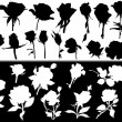 Rose flower white and black silhouettes collection — Stock vektor