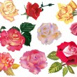 Set of ten color roses — Stock Vector