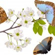 Cherry tree branch with three big butterflies — Stock Vector