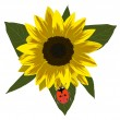 Red ladybird on yellow sunflower — Stock Vector