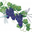 Постер, плакат: Dark grapes and two dragonflies