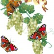 Green grapes and red butterflies — Stock Vector
