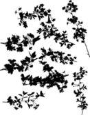 Nine cherry tree branch silhouettes — Stock Vector