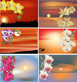 Set of orchid flowers at sunsets — Stock Vector