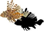 Peces exóticos marrón sobre fondo blanco — Vector de stock