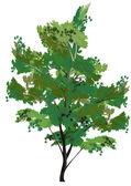 Green isolated tree illustration — Stock Vector