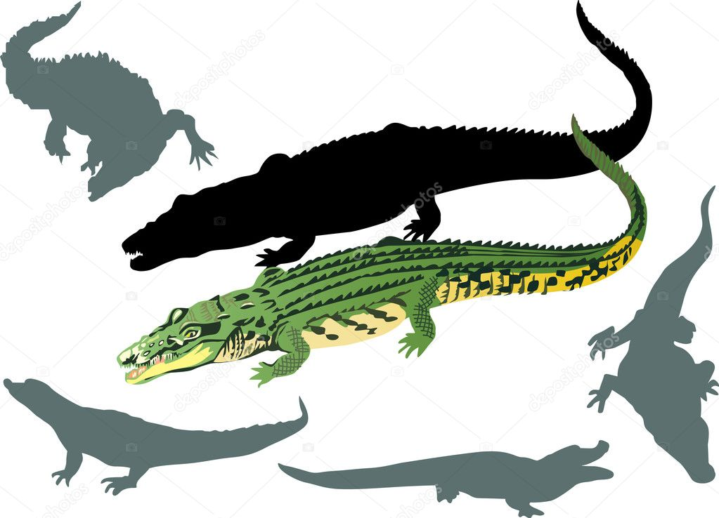 Illustration with crocodiles on white background — Stock Vector #6650285