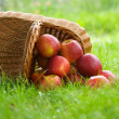 Apples in the basket — Stock Photo #5993066