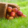 Apples in the basket — Stock Photo #5993070