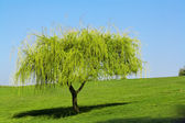 Young tree — Stockfoto
