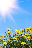 Beautiful yellow flowers — Stockfoto
