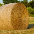 Bale field - Stock Photo