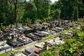 Cemetery in forest — Stock Photo