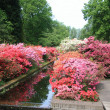 Stock Photo: Collection rhododendrons