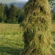 Slope of hay — Stock Photo