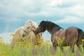 Horses on a green lawn — Stock Photo
