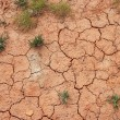 Stock Photo: Sparse vegetation on cracked red soil