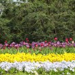 Foto Stock: Colorful flower garden