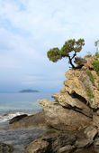 Pine tree on a rock above the sea — Stock Photo