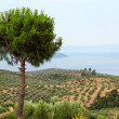 Landscape Sithonia Halkidiki Greece — Stock Photo