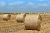 Straw bales agriculture industry — Stock Photo