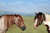 Two horses portrait — Stock Photo