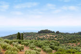 Sithonia Halkidiki Greece landscape — Stock Photo