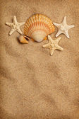 Sea life and beach - summer background — Stockfoto