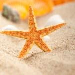 Starfish and shells on sand — Stock Photo #6511047