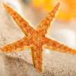 Starfish — Stock Photo #6511372