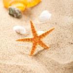 Starfish and shells on sand — Stock Photo #6511988