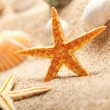 Starfish and sea shells on sand - Stock Photo