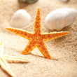 Shell and starfish on sea sand - Stock Photo