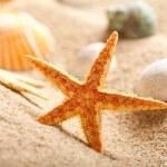 Sea Shells and starfish on sand — Stock Photo #6518803
