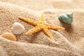 Starfish on sand — Stock Photo