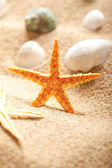 Shell and starfish on sea sand — Stock Photo