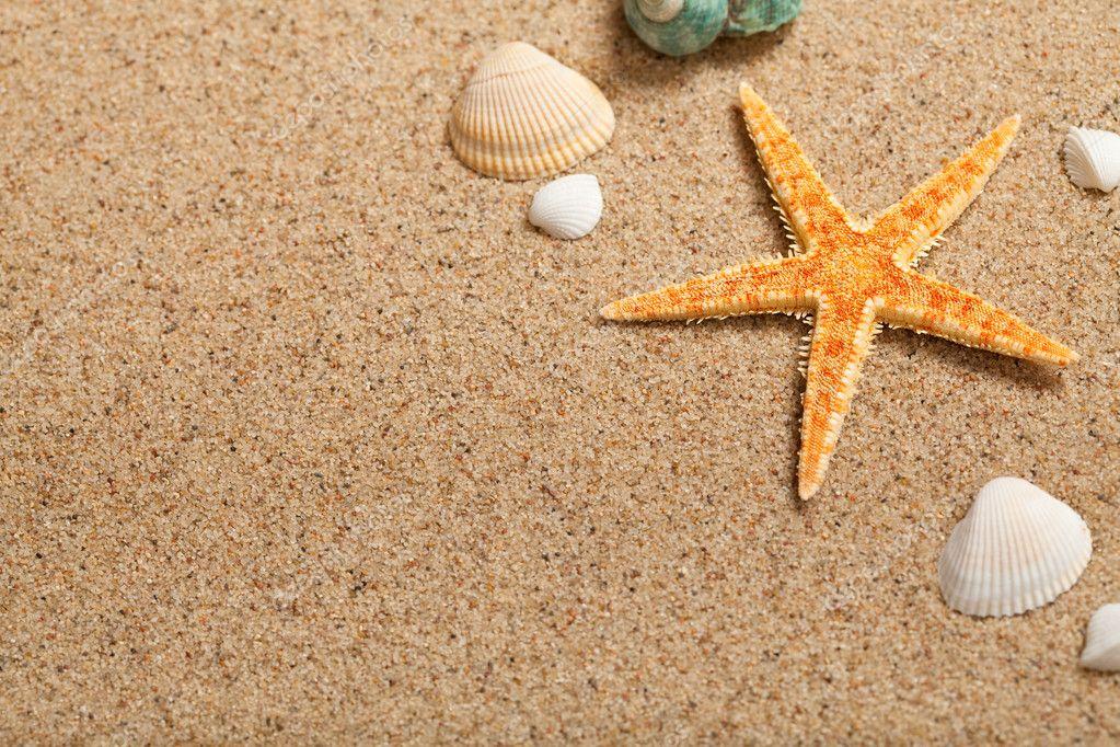 Морские звезды и ракушки в дизайне