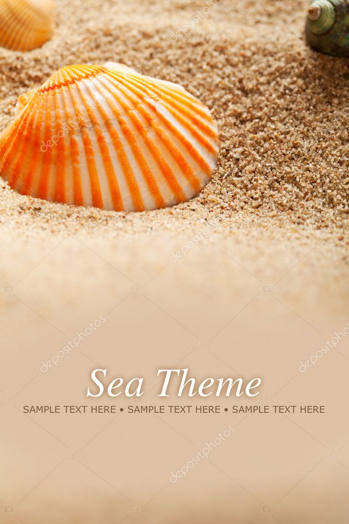 Sea Theme - sand and shells  Stock Photo #6518786