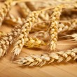wheats — Stock Photo #6571480