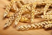 Wheats — Stock Photo