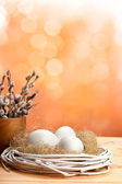 Catkin and eggs in the nest — Stock Photo