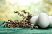 Witte eieren en katje — Stockfoto