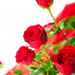 Stock Photo: Flowers - red roses on white background