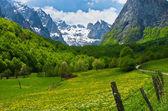 Montanha de prokletije, montenegro — Foto Stock